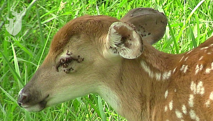 Deer And Tick Survey – Results Are In!